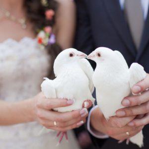 Hochzeitstauben auf dem Milanhof